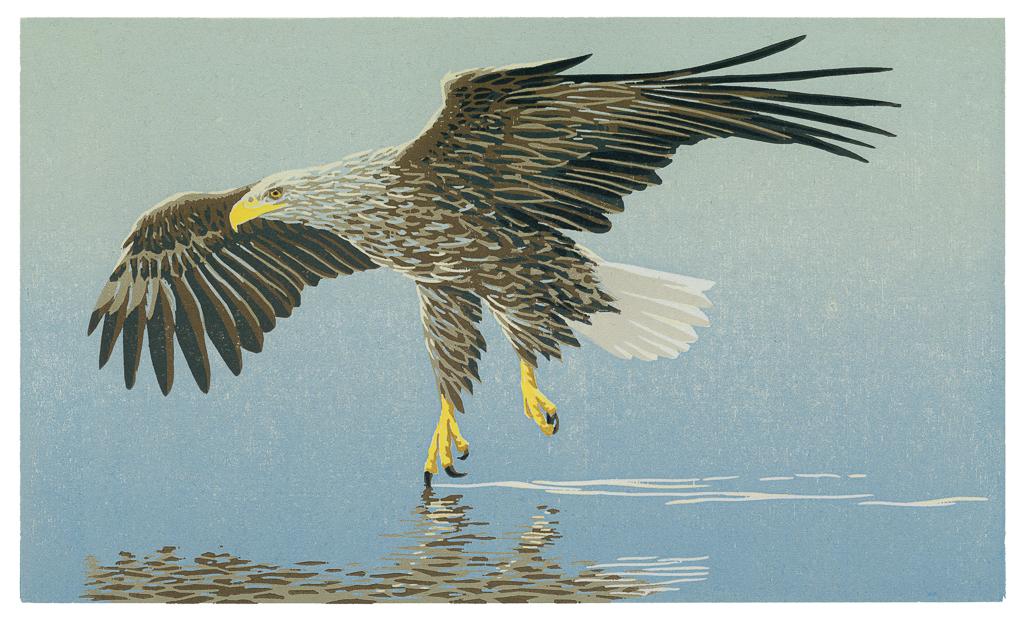 Vliegende zeearend, 2015, houtsnede, gedrukt op Awagami Mingeishi, 220 x 375 mm